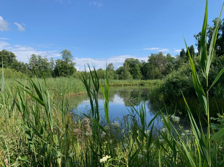 Mokřady Jablonné v Podještědí