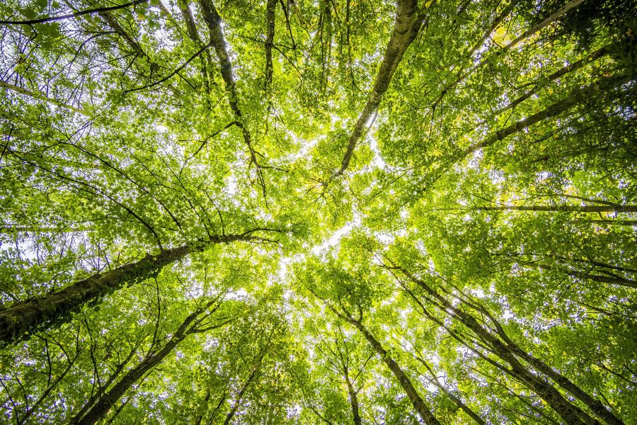 Koruny stromů v lese