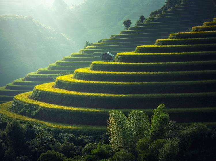 Rýžové plantáže