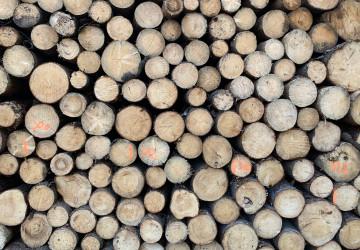 Vykácené dřevo