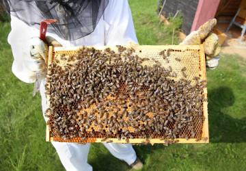 Včely z letiště