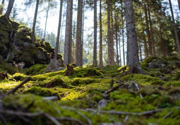 Lesy na hoře Patscherkofel v Rakousku