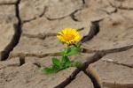 Květina ve vyprahlé půdě