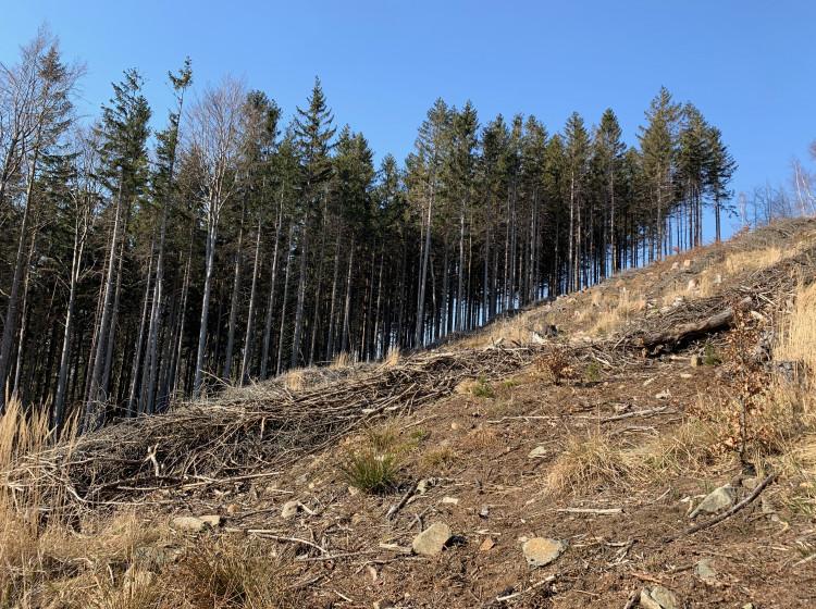 Les vykácený v důsledku kůrovcové kalamity