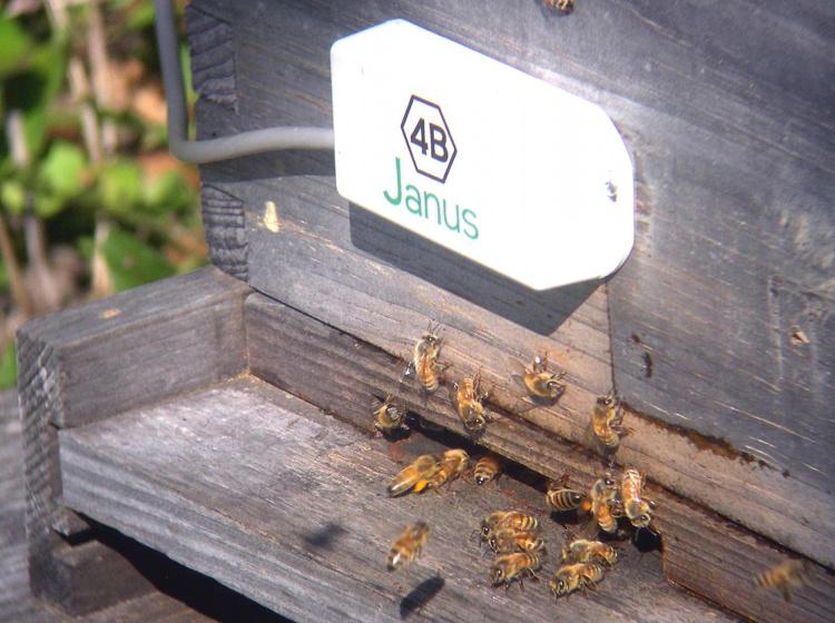 senzor Janus