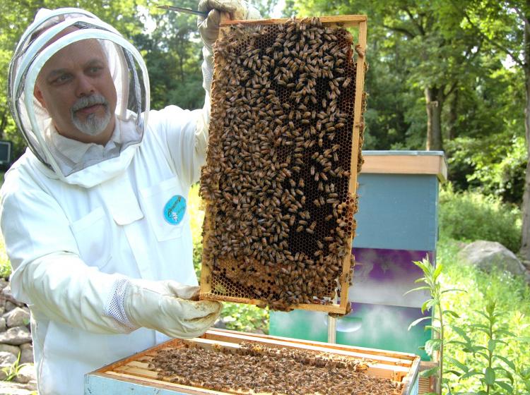 Včelař při práci ve včelstvu