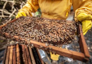 Včelí plástve