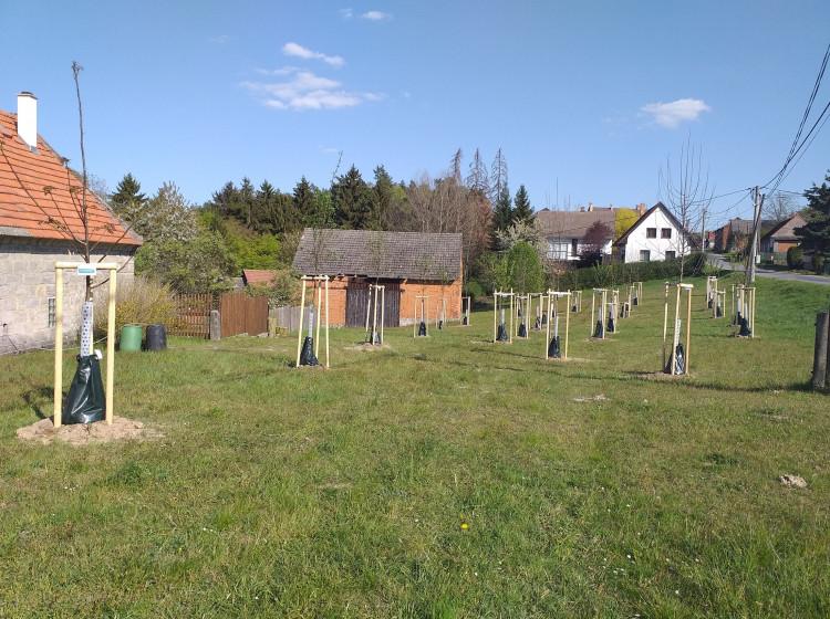 Nová výsadba v obci Nosálov