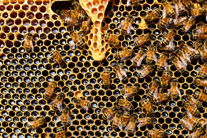Včely