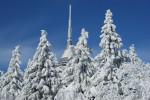 Lesy na Ještědu v zimě